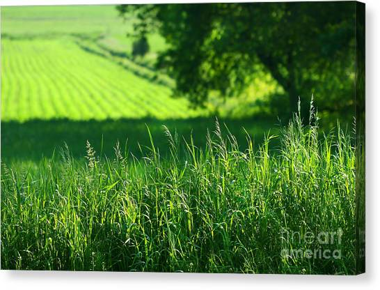 Summer Holiday Canvas Print - Summer Fields Of Green by Sandra Cunningham