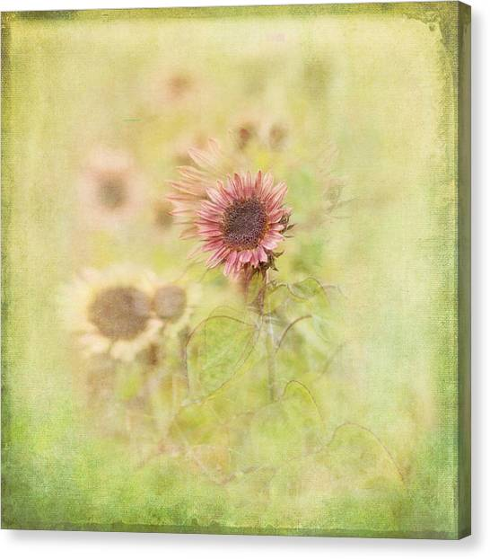 Susan Canvas Print - Summer Fields by Susan Capuano