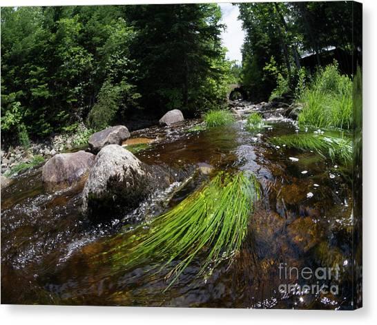 Summer Flow Of Water Near Rangeley Maine  -63322 Canvas Print