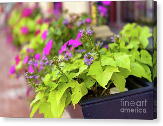 Summer Flowers In Window Box Canvas Print
