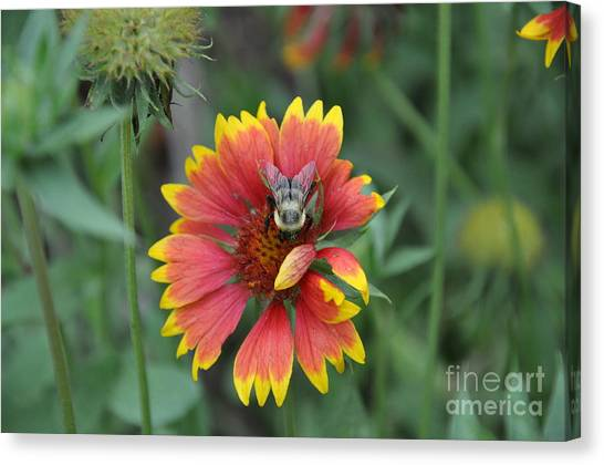 Summer Canvas Print by Jo Thompson Pennypacker