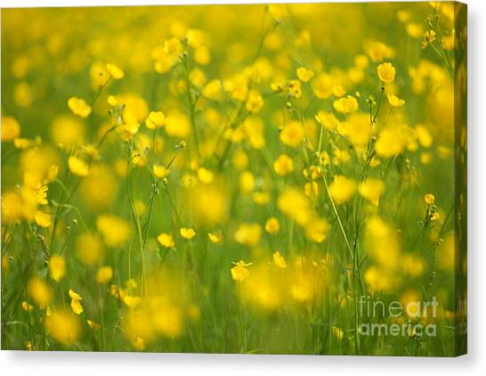 Summer Canvas Print by Josh Baldo