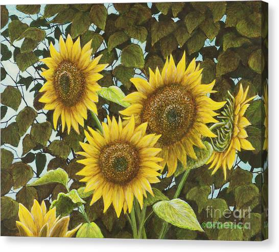 Sunflowers Canvas Print - Summer Quintet by Marc Dmytryshyn