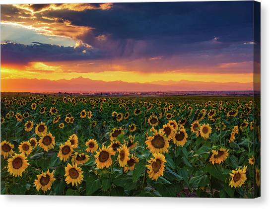 Summer Radiance Canvas Print