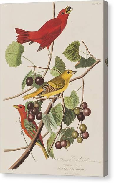 Wild Berries Canvas Print - Summer Red Bird by John James Audubon