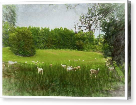 Canvas Print featuring the digital art Summer Sheep by Barry Jones
