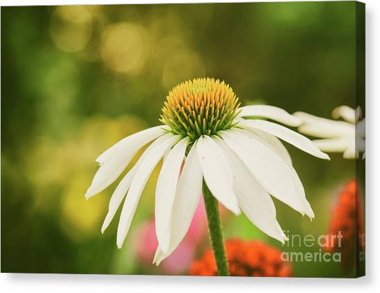 Summer Sunshine Canvas Print