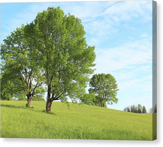 Summer Trees Canvas Print