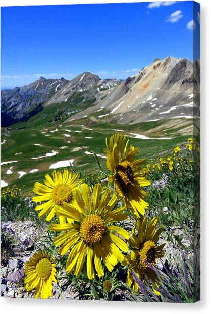 Canvas Print featuring the photograph Summer Tundra by Karen Shackles