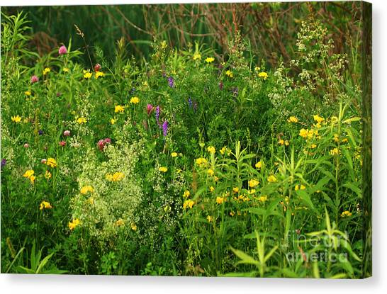 Summer Wildflowers Canvas Print