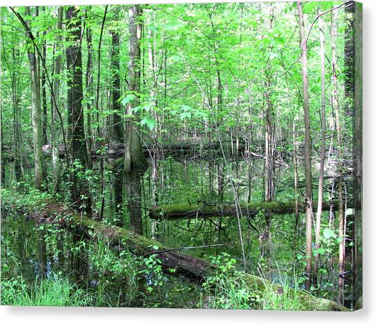 Summer Woods Canvas Print by Trisha Dahm