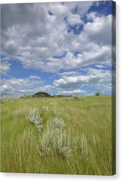 Summertime On The Prairie Canvas Print