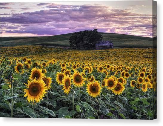 Summertime Sunflowers Canvas Print