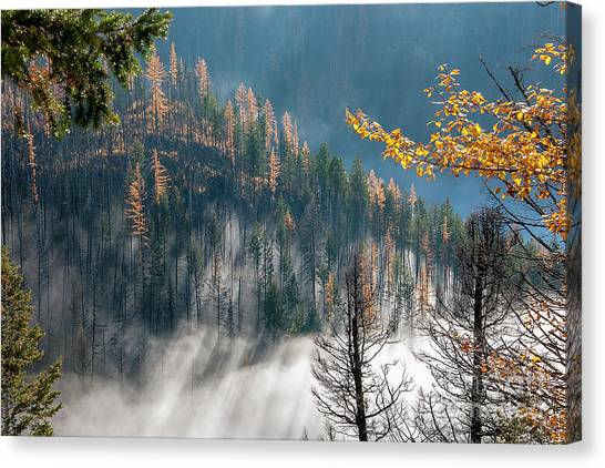 Sun And Mist Canvas Print