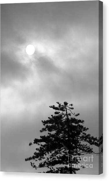 Sun And Tree Canvas Print