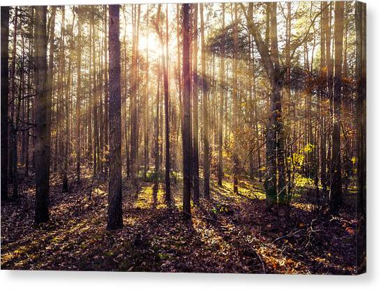 Sun Beams In The Autumn Forest Canvas Print