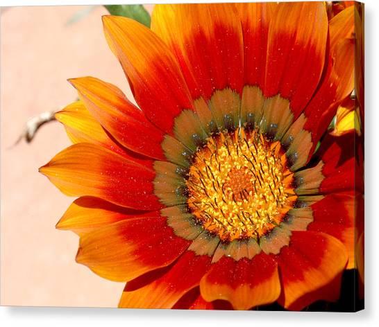 Sun Bloom Of Fire Canvas Print by Edan Chapman