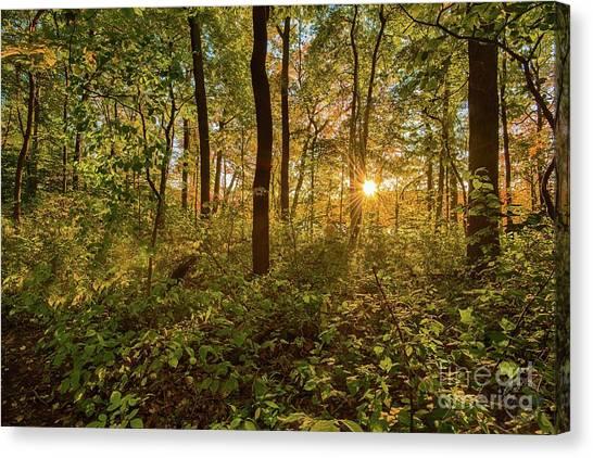 Sun Burst  Canvas Print