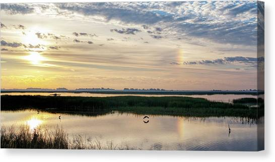 Canvas Print featuring the photograph Sun Dog And Herons by Rob Graham