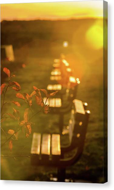 Sun Drenched Bench Canvas Print