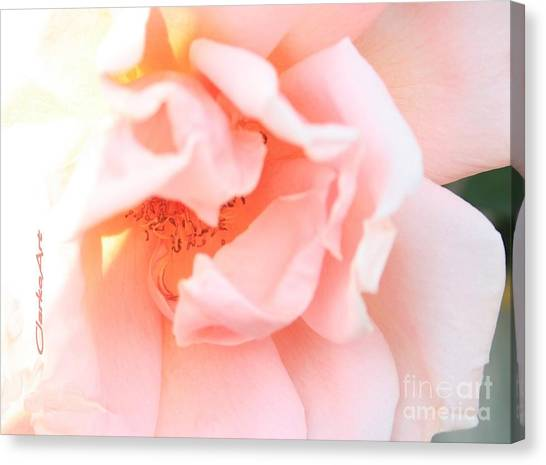 Sun-drenched Rose Canvas Print