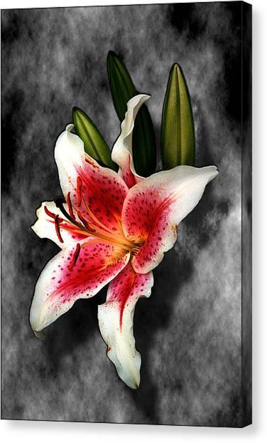 Sun Gazer Lily Canvas Print