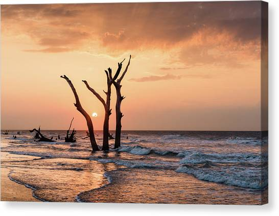 Bulls Canvas Print - Sun Is Up by Ivo Kerssemakers