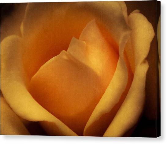 Sun-kissed Rose At Dusk Canvas Print