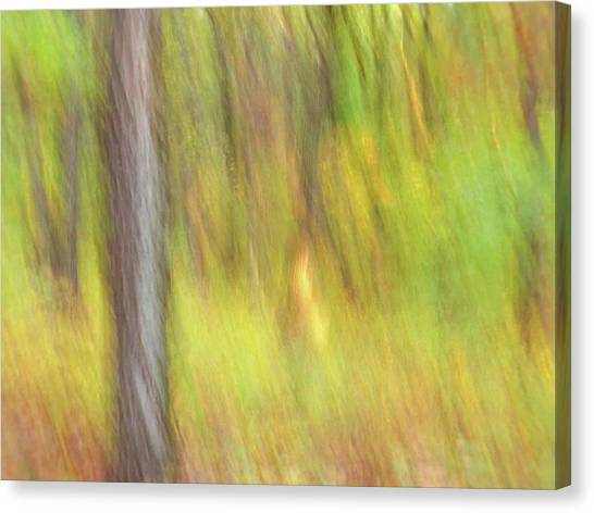 Canvas Print featuring the photograph Sun Kissed Tree by Bernhart Hochleitner