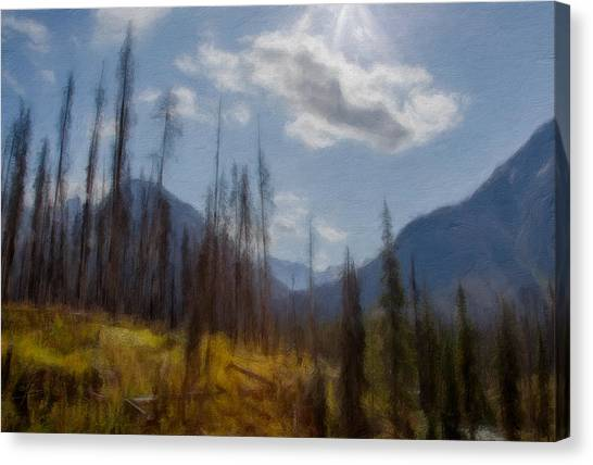Sun Light In The Forest Canvas Print