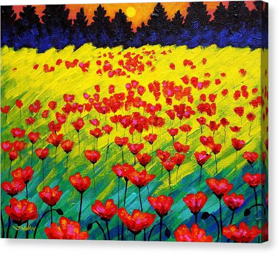 Sun Poppies Canvas Print by John  Nolan