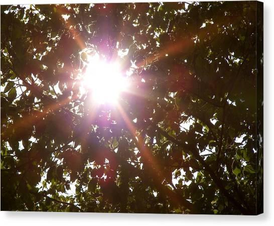 Sun Rays Canvas Print by JAMART Photography