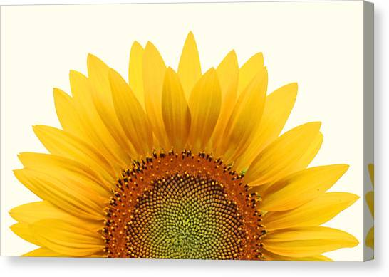 Sunflower Canvas Print - Sun Rise by Richard Moiger