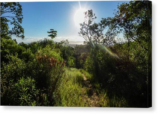 Sun Shining Over The Atlantic Forest Canvas Print