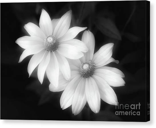Sun Sisters In Black And White Canvas Print
