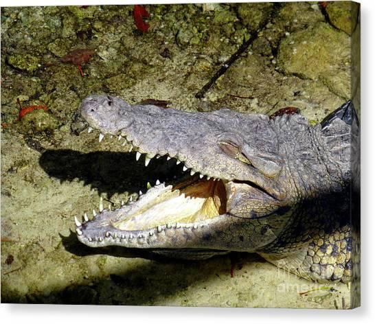 Sunbathing Croc Canvas Print