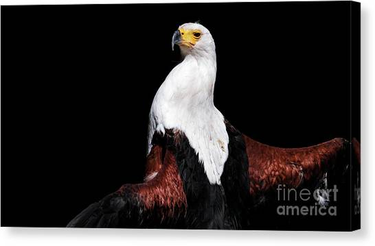 Sunbathing Eagle Canvas Print