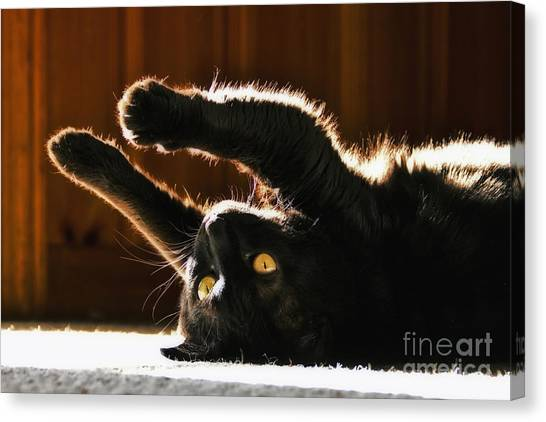 Sunbeam Kitty Canvas Print