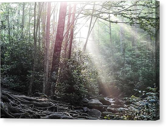 Sunbeam Streaming Into The Forest Canvas Print