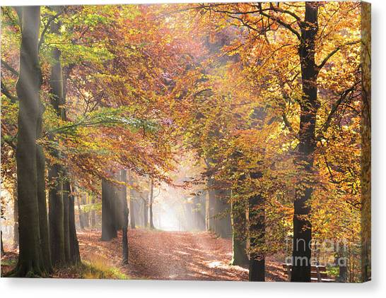 Sunbeams In A Forest In Autumn Canvas Print