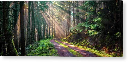 Sunbeams In Trees Canvas Print