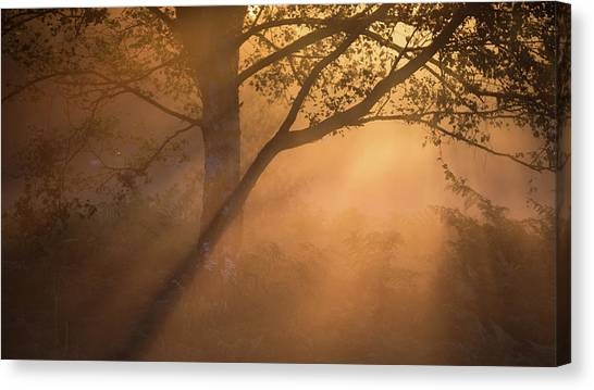 Sherwood Forest Canvas Print - Sunburst by Chris Dale