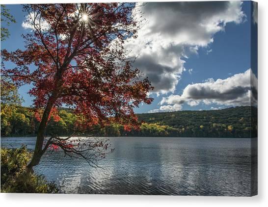 Sunburst Tree At Silvermine Lake Canvas Print