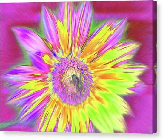 Sunbuzzy Canvas Print
