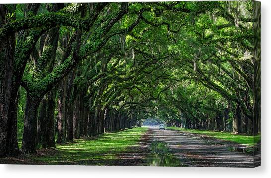 Sunday Drive Canvas Print by Michael Donahue