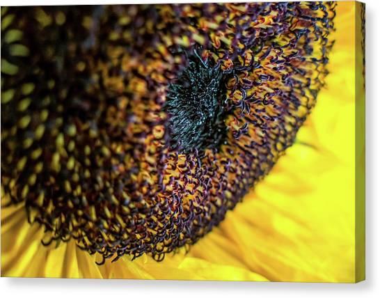 Canvas Print - Sunflower 2 by Elijah Knight