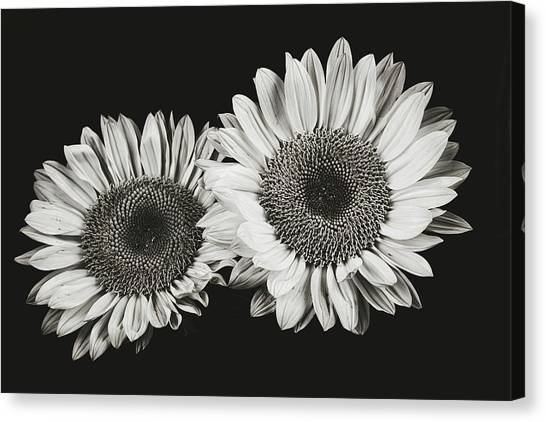 Sunflower #5 Canvas Print