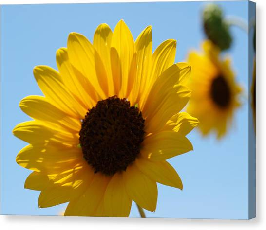 Sunflower 4 Canvas Print by James Granberry
