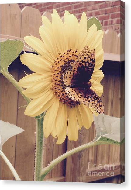 Sunflower And Butterfly Canvas Print