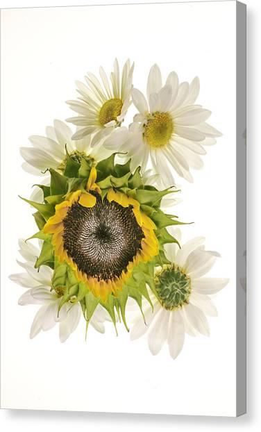 Sunflower And Daisies Canvas Print